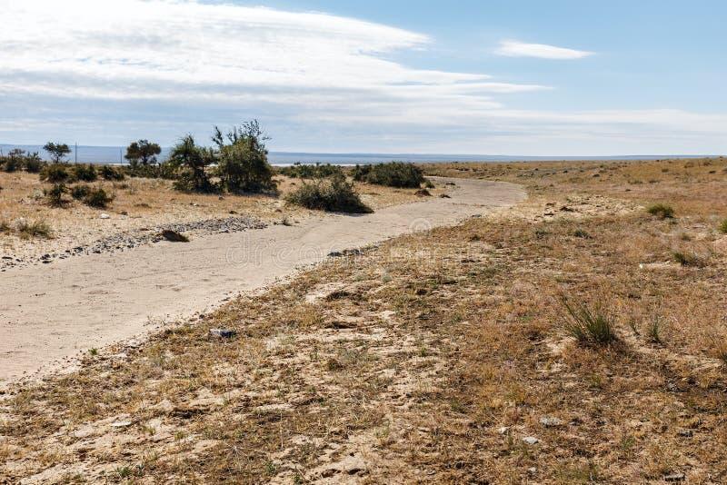 Gobi desert mongolia. Gobi desert, green trees in desert, Mongolia royalty free stock image