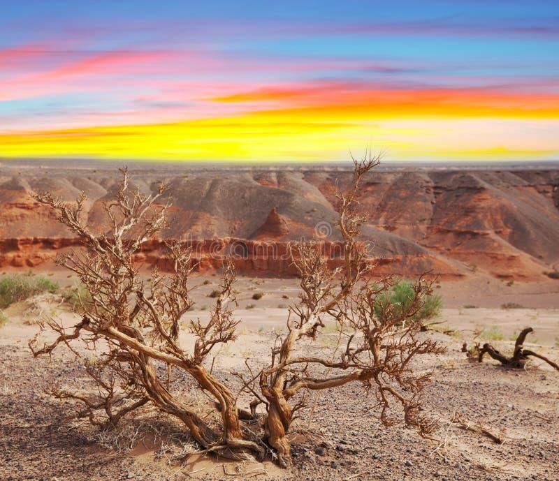 Gobi pustynia fotografia royalty free