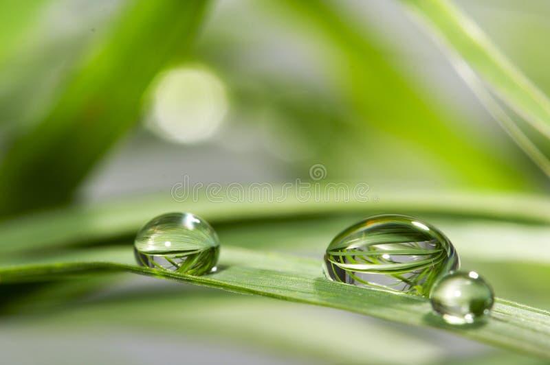 Gocce con erba verde fotografie stock libere da diritti