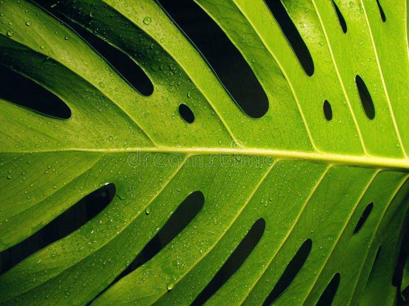 Gocce dell'acqua e della pianta immagini stock