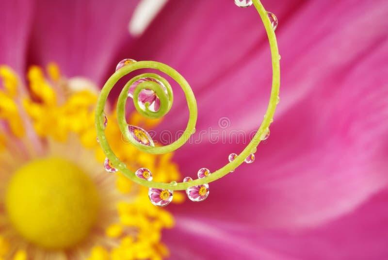 Gocce dell'acqua e di spirale fotografia stock libera da diritti