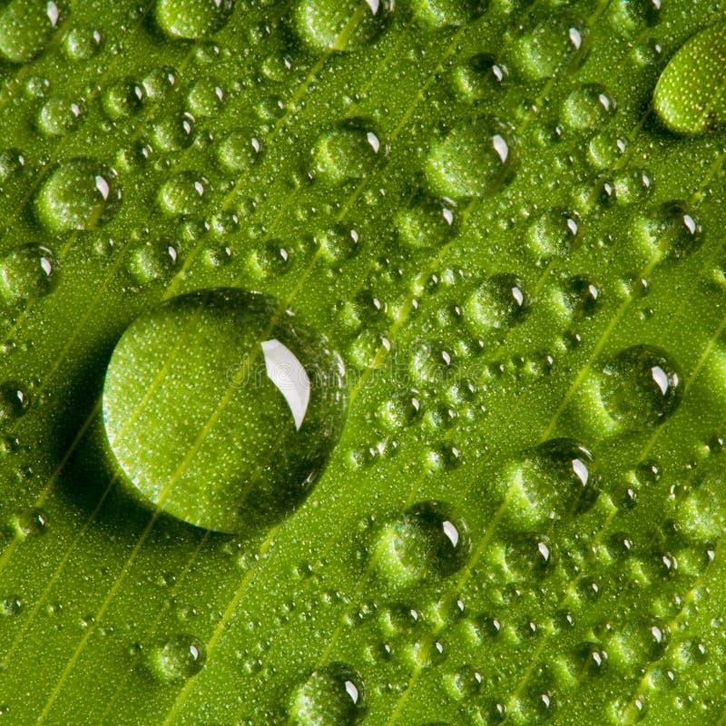 Gocce dell'acqua sul foglio verde fresco fotografia stock