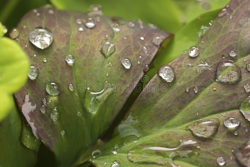 Gocce dell'acqua sulla pianta fotografie stock libere da diritti