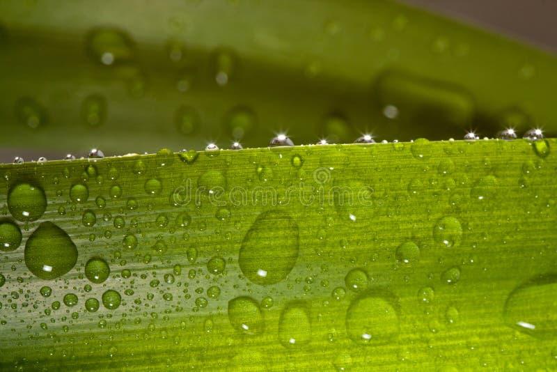 Gocce dell'acqua sulla pianta immagine stock