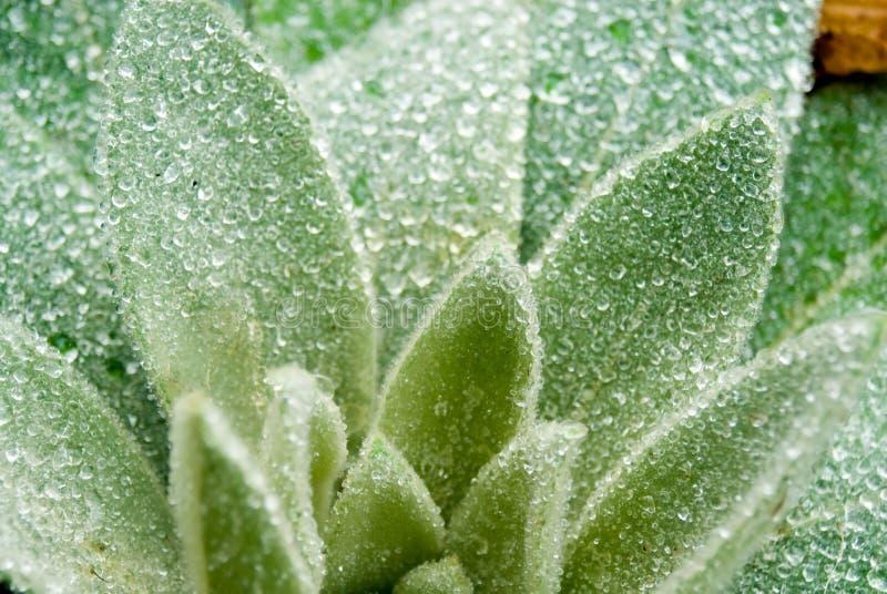 Gocce della holding della pianta di pioggia fotografia stock libera da diritti