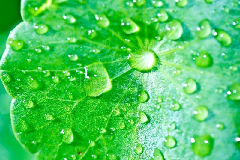 Gocce della pioggia sul foglio della pianta immagini stock libere da diritti