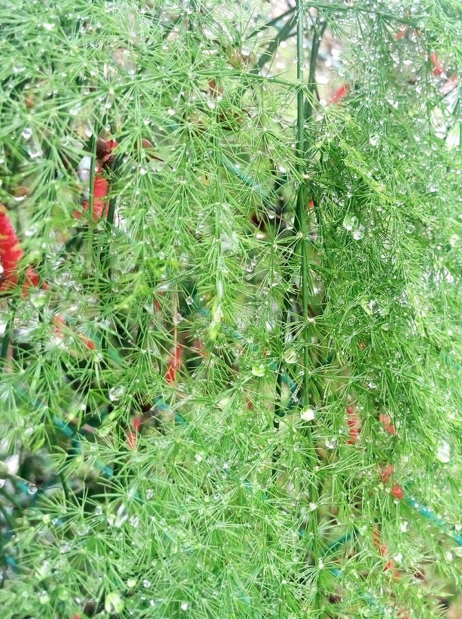 Gocce di acqua delle piante verdi immagine stock
