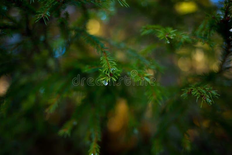 Gocce di acqua su un albero fotografie stock libere da diritti