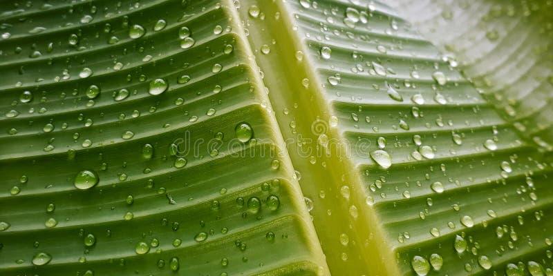 Gocce di acqua su una foglia fotografia stock libera da diritti
