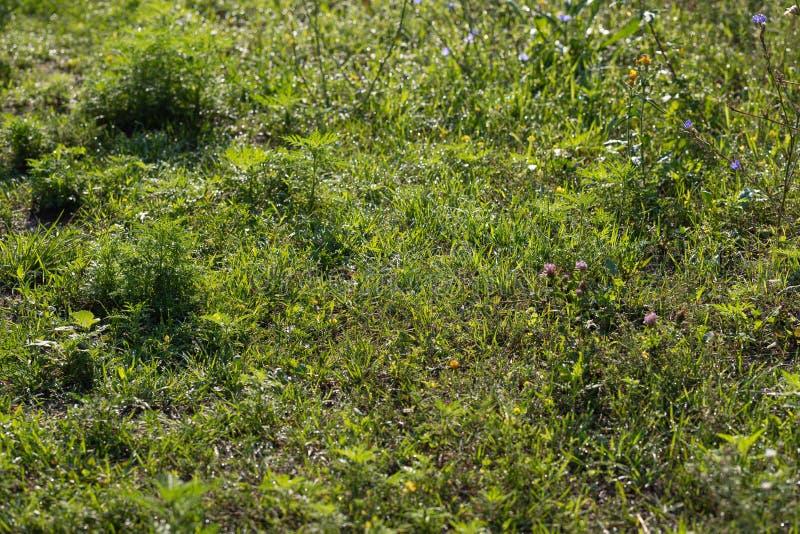 Gocce di acqua sulle foglie verdi fotografie stock