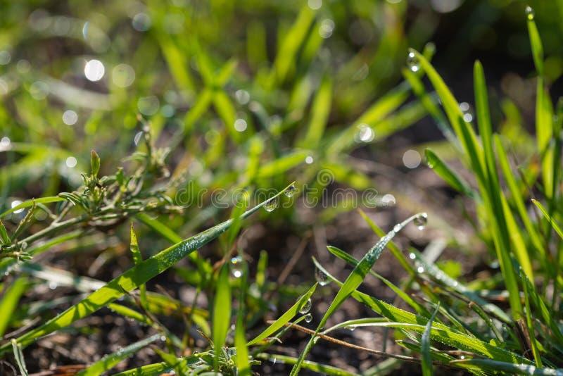 Gocce di acqua sulle foglie verdi fotografie stock libere da diritti
