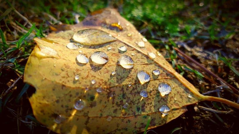 Gocce di pioggia immagini stock libere da diritti