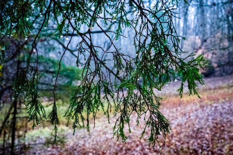 Gocce di pioggia nelle montagne fotografie stock