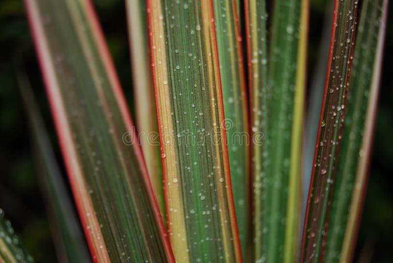 Gocce di pioggia sui fogli   fotografia stock