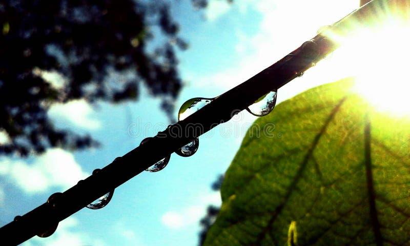 Gocce di pioggia sul ramo immagini stock