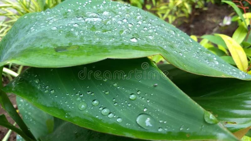 Gocce di pioggia sulle foglie in giardino fotografia stock