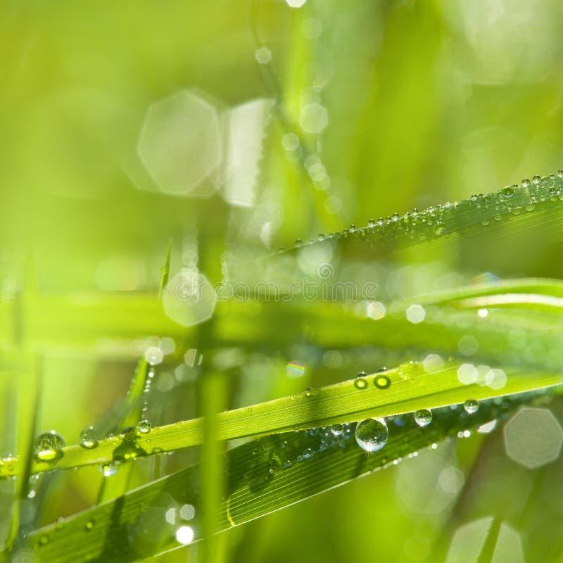 Gocce di rugiada e dell'erba fotografia stock