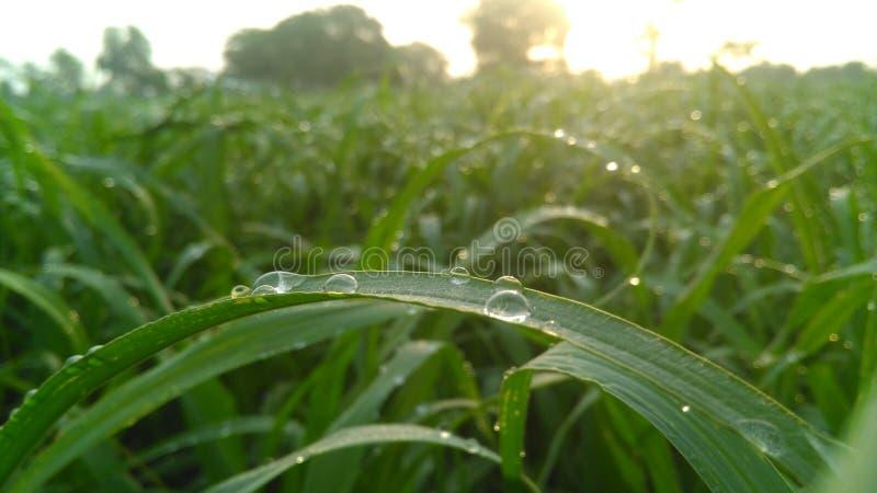 Gocce di rugiada su erba immagini stock libere da diritti