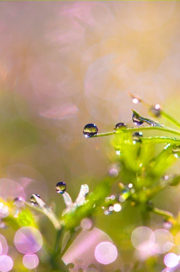 Gocce di rugiada sull'erba abbagliamento del sole da rugiada fotografia stock