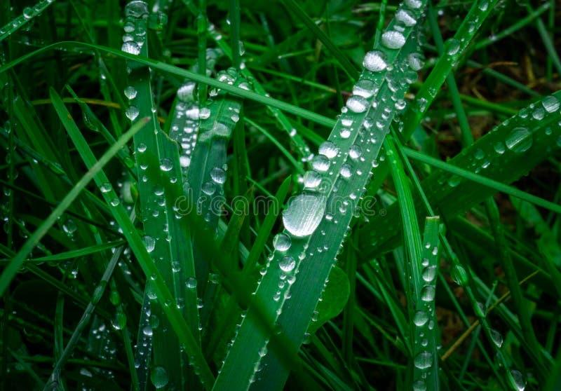 Gocce di rugiada sull'erba immagini stock libere da diritti