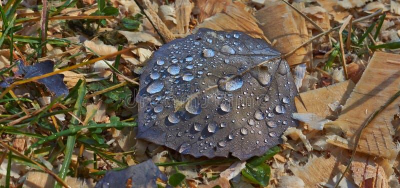 Gocce di rugiada sulle foglie cadute fotografie stock