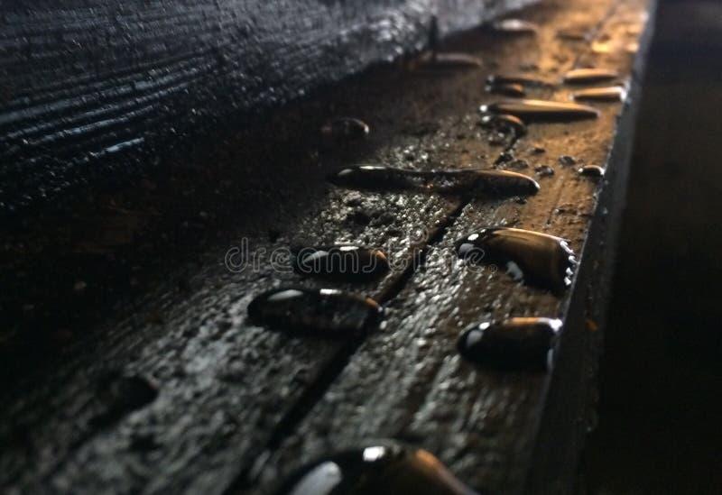 Gocce su legno fotografia stock