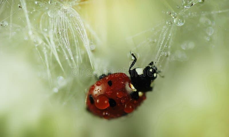 Gocce su un fiore fotografia stock libera da diritti
