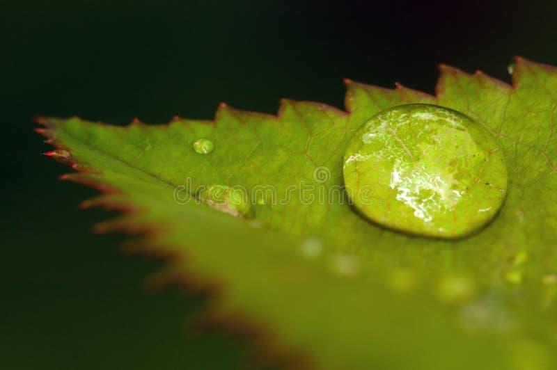 Download Goccia dell'acqua immagine stock. Immagine di verde, calma - 3876375
