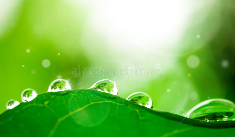 Goccia dell'acqua sul foglio immagini stock