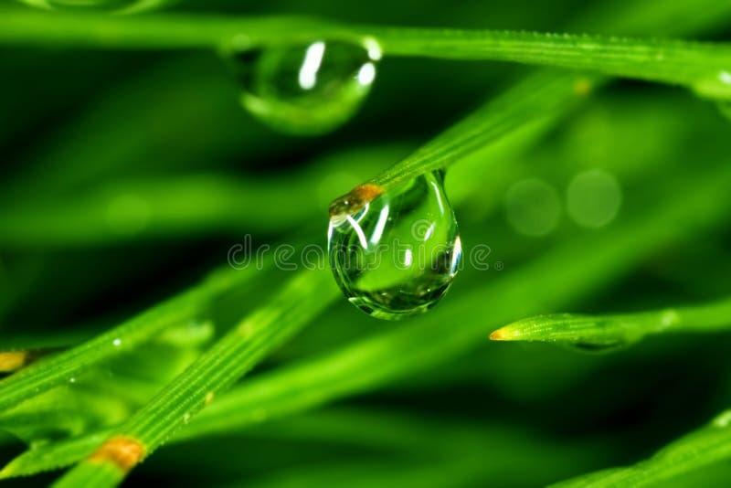 Goccia dell'acqua sul foglio fotografia stock
