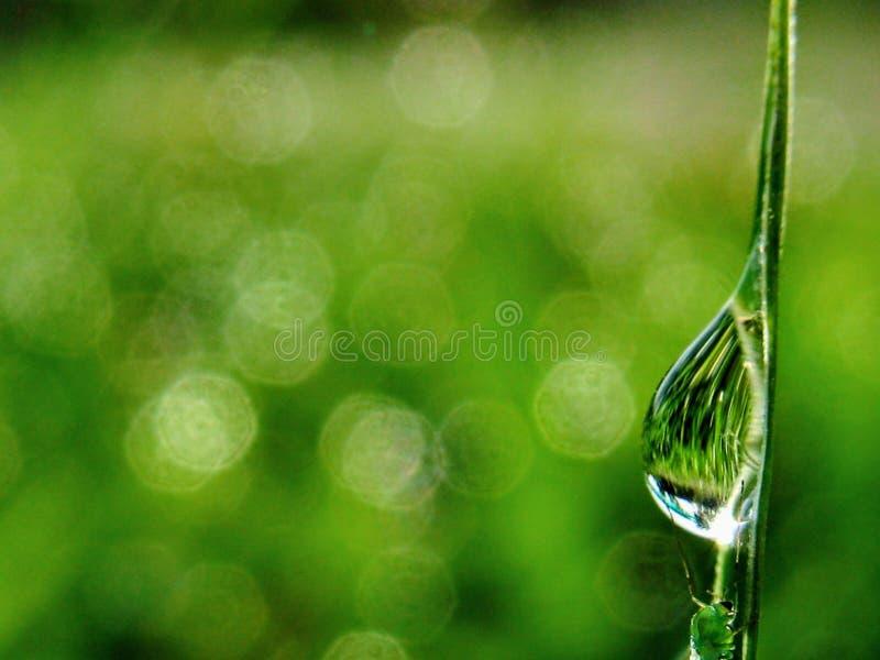 Goccia della rugiada dell'acqua fotografie stock libere da diritti