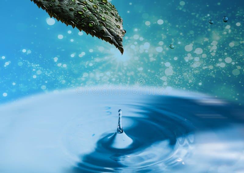Goccia di acqua con la foglia verde su fondo verde astratto Foglia fresca bagnata della pianta sopra la superficie dell'acqua con fotografia stock