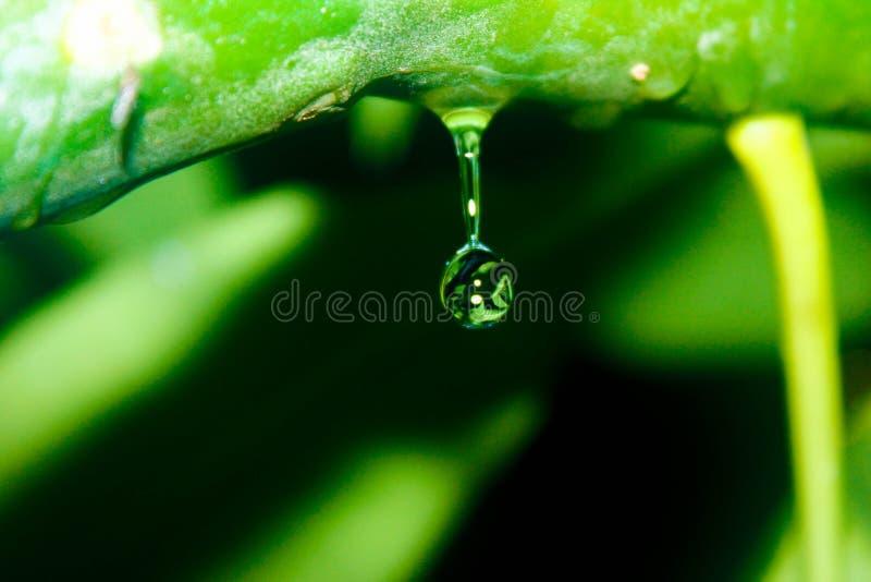 Goccia di acqua negli alberi di una natura dentro immagine stock libera da diritti