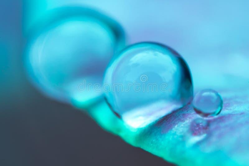 Goccia di acqua sulla foglia blu fotografia stock libera da diritti