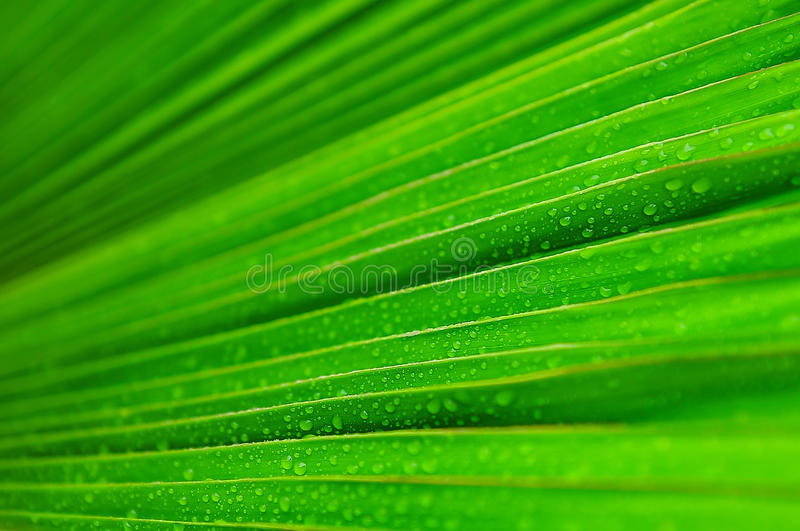 Goccia di acqua verde fresca della foglia fotografia stock