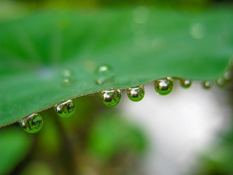Goccia di pioggia sulla foglia fotografie stock libere da diritti