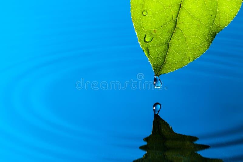 Goccia verde dell'acqua e del foglio fotografia stock