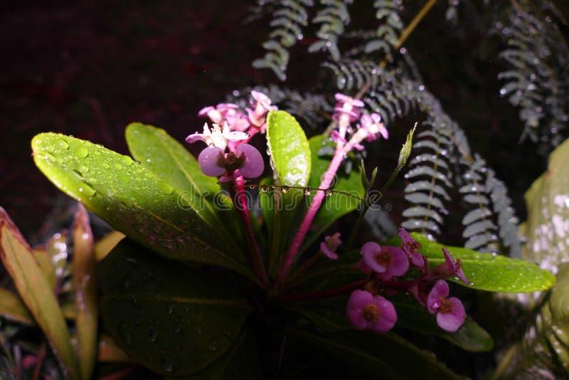 Gocciolamento sul fiore fotografia stock
