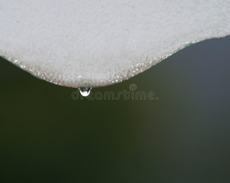 Download Gocciolina di acqua fotografia stock. Immagine di singolo - 203752