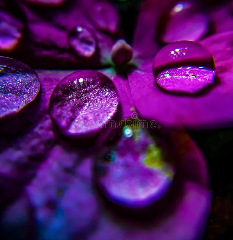 Gocciolina di acqua del Wildflower immagine stock libera da diritti