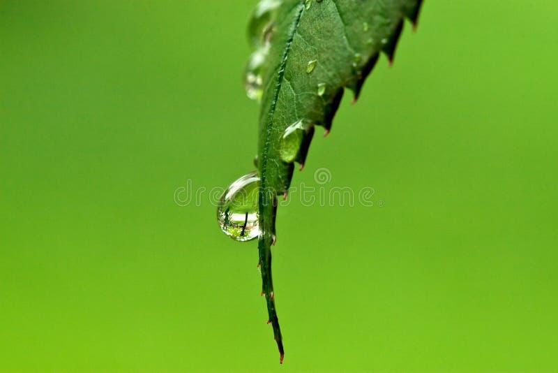 Gocciolina di macro dell'acqua fotografia stock libera da diritti