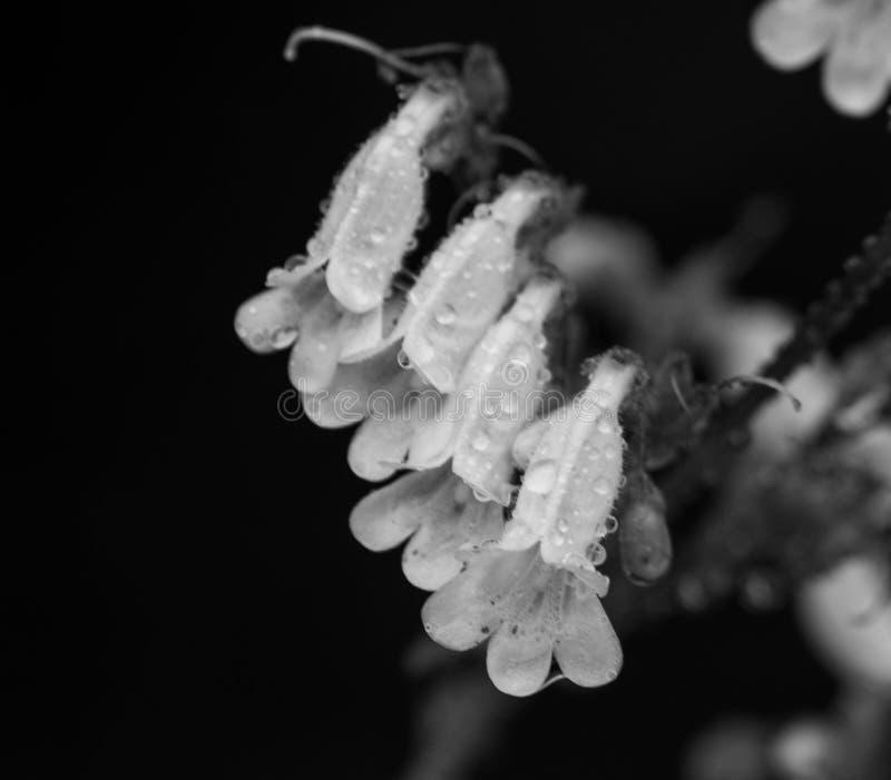 Goccioline della pioggia sui fiori fotografia stock