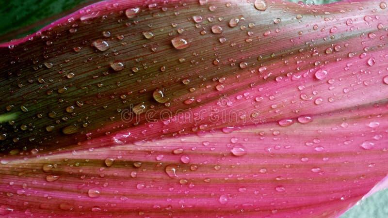 Goccioline piacevoli di un primo mattino di pioggia immagini stock