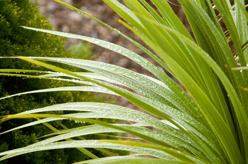 Goccioline su una pianta fotografia stock