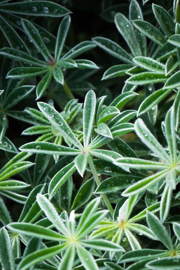 Goccioline sulla bella pianta fotografie stock libere da diritti