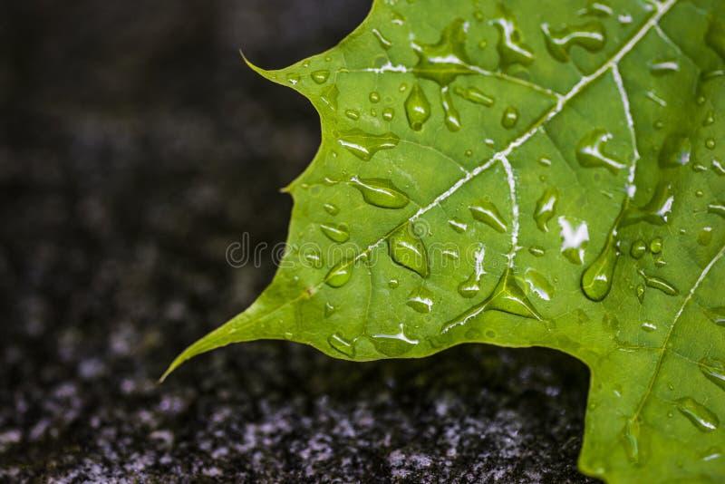 Goccioline verdi di acqua e di permesso fotografia stock libera da diritti