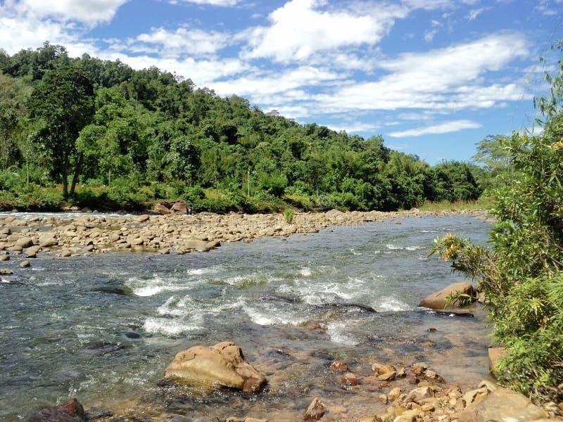 Goce el excitar del senderismo de la selva en Sabah, Borneo fotografía de archivo libre de regalías