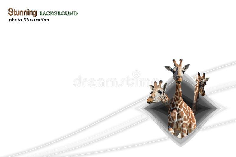 God Breathed Giraffe royalty free stock photography