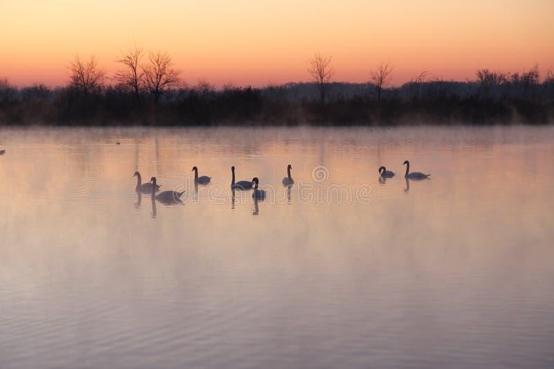 God morgon vinter royaltyfri fotografi