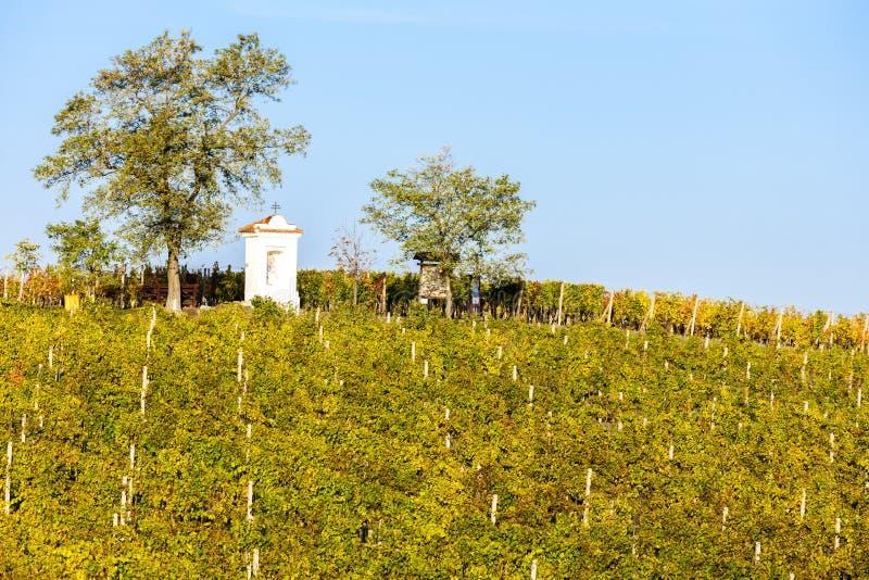 God& x27; & x27; s-tortyr med den höstliga vingården, Modre Hory, sydliga Mora royaltyfria foton